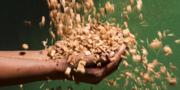 Vegetable Grow Bag Suppliers Online